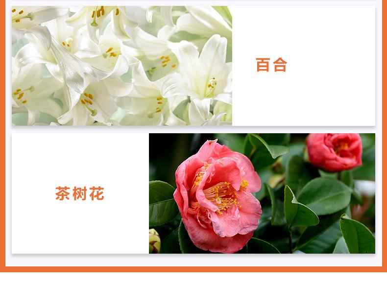 参菊_04.jpg
